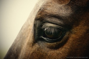 Horses for a veterinary dental seminar