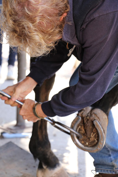 A thorough physical examination and trot-up is vital to the diagnosis of any lameness