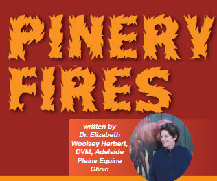 Pinery Fires, and the Brave Survivors, Part 2